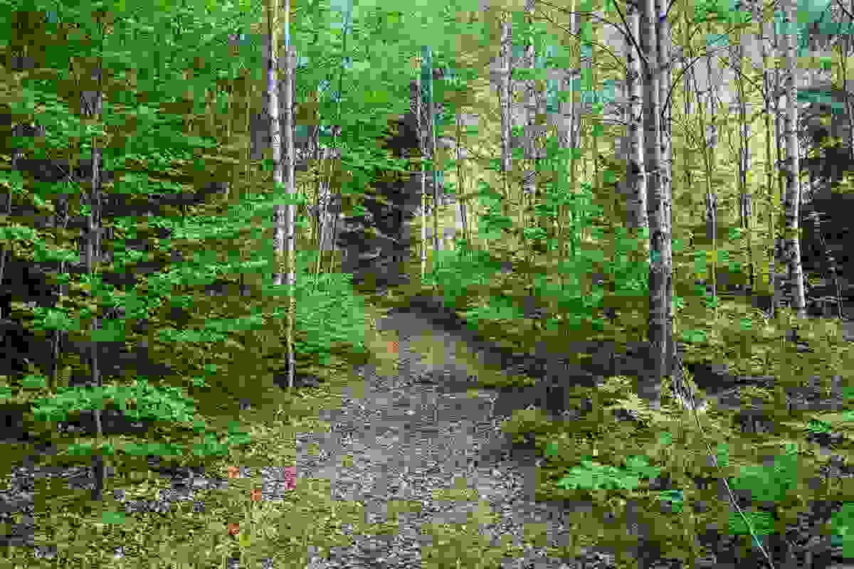 Turområder i skogområdet i umiddelbar nærhet