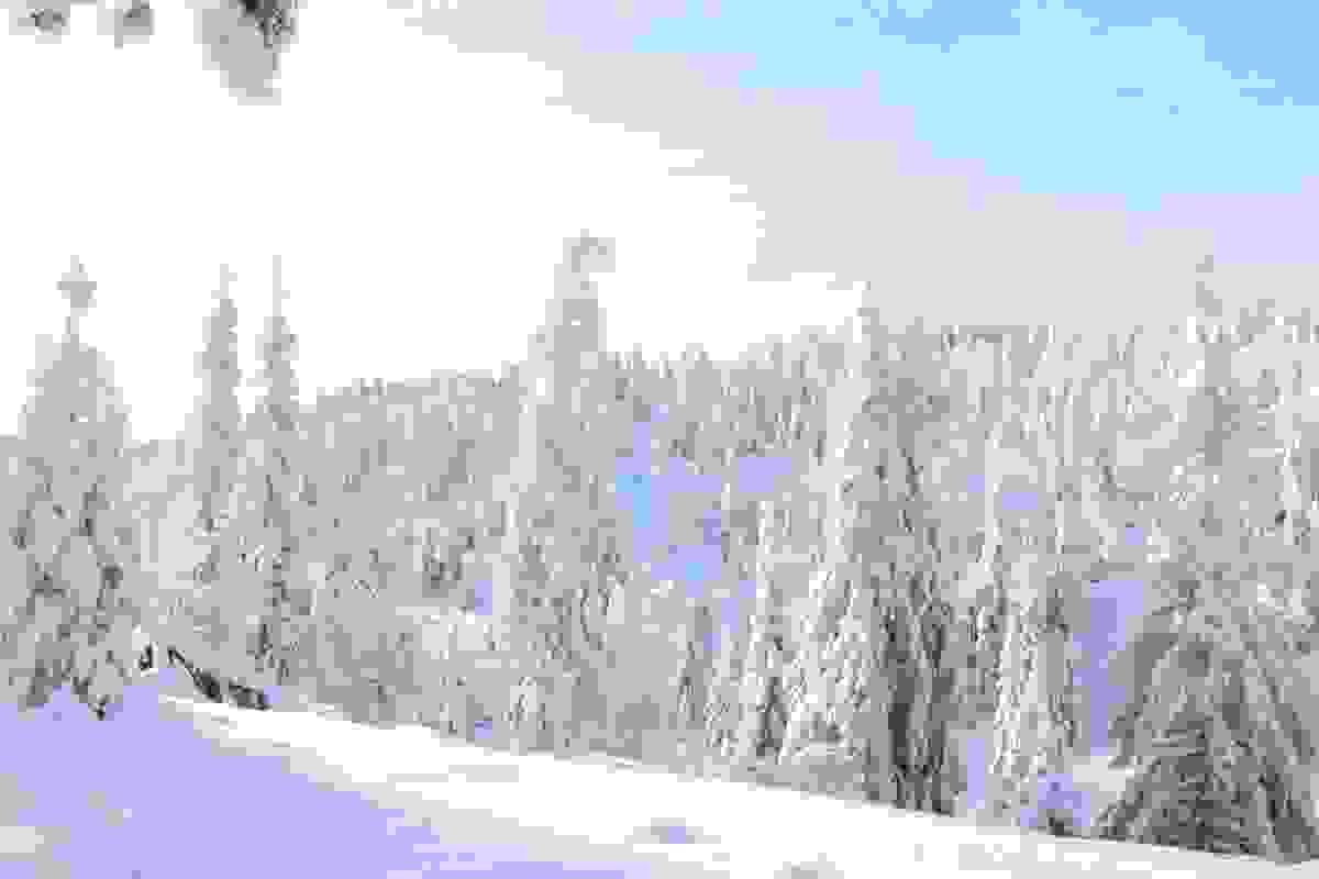 Fjellseterlia - Februar 2017