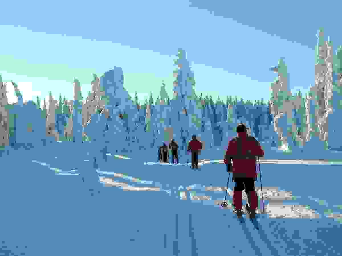 Områdebilde - Skitur i trollskogen