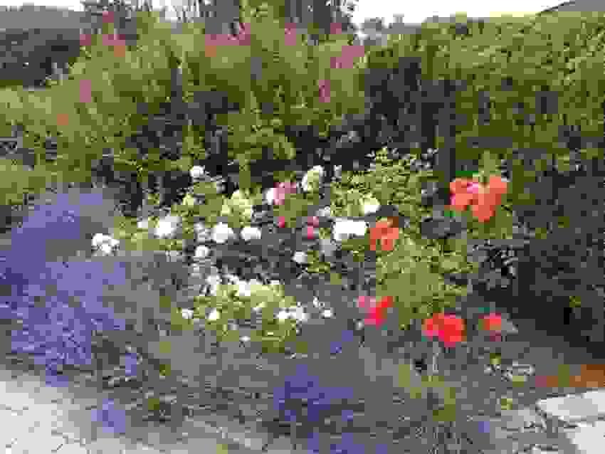 Bilde tatt av selger - Fargerikt blomsterbed