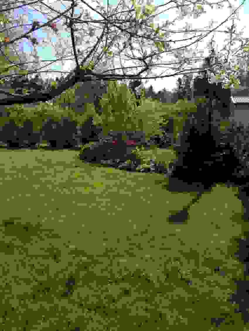 Bilde tatt av selger - Hage med blomsterbed