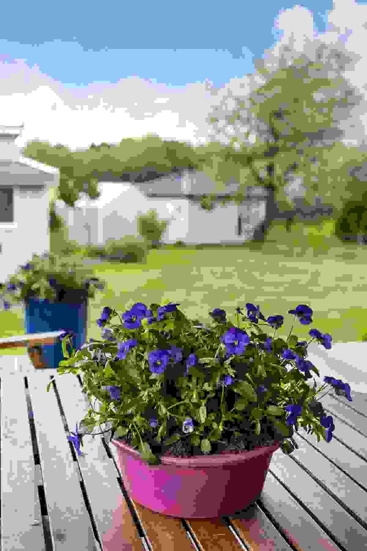 Solrik og usjenert hage