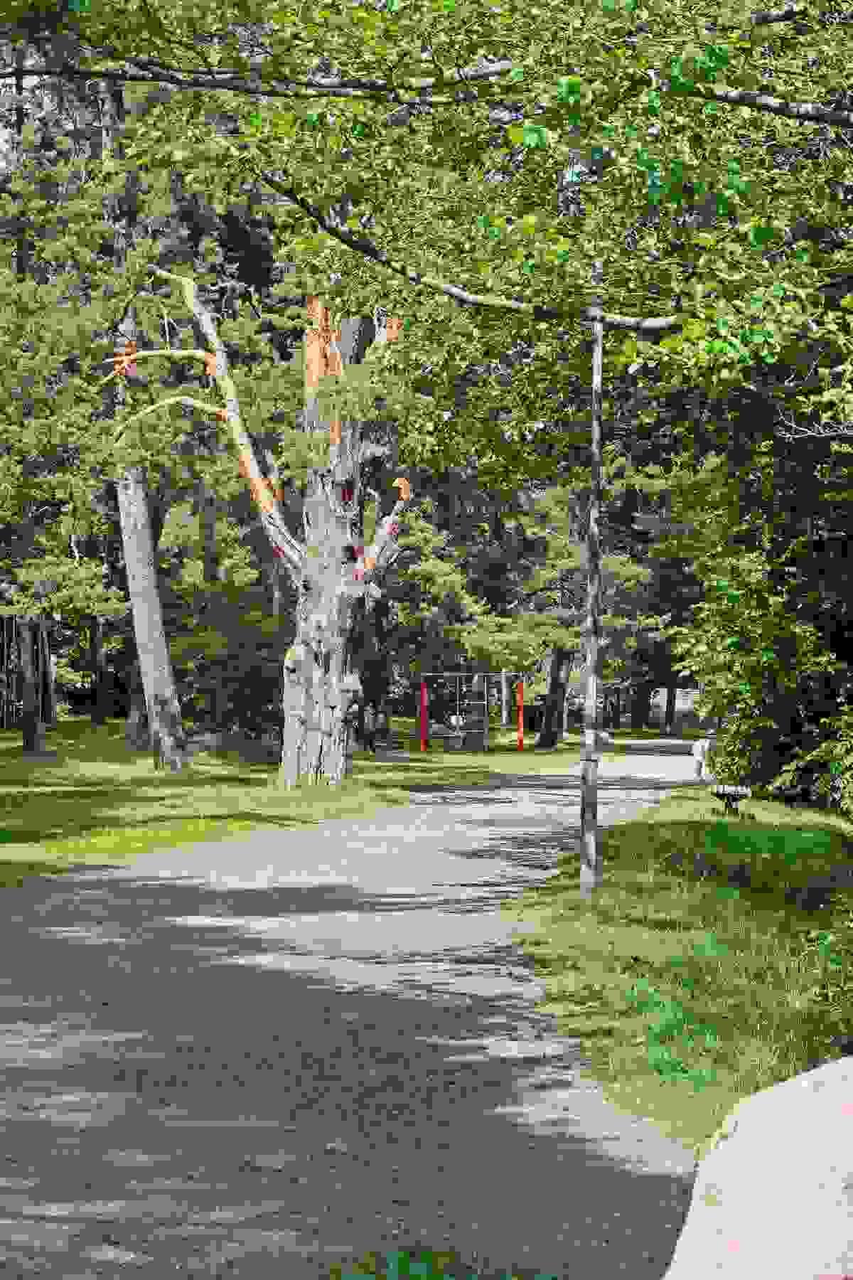 Nærområde; Turområder i Greveskogen